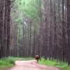 Caballo en bosque Alpa Corral Córdoba