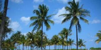 Miami en auto