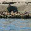 Ballenas en Peninsula de Valdes Puerto Madryn Chubut