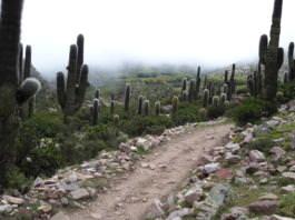Tumbaya sendero punta corral